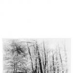 Wald in Erlenhagen